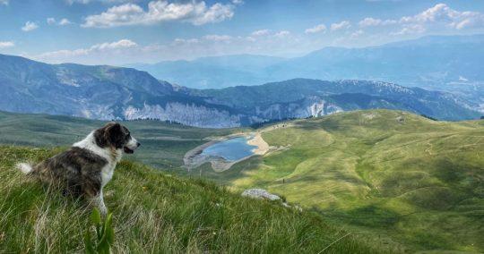 A dog looking at Grama Lake, Peshkopi