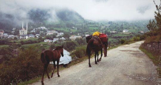 High Scardus Trail Radomire Village
